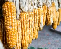Can the SA economy or your pocket handle another increase in maize prices?