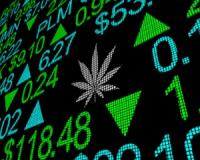 Q&A: 5 Top Cannabis stocks to trade and 1 JSE listed stock that's entered the marijuana market