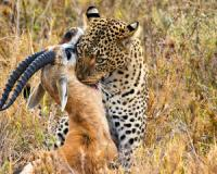 A leopard will wait a week to catch its prey, so should a successful trader