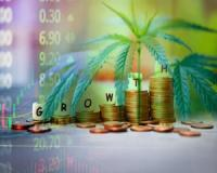 Why this JSE Cannabis Penny Stock Is About To Sky Rocket
